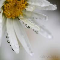 Daisies by Haen9