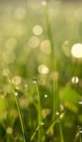 High on morning dew by Haen9