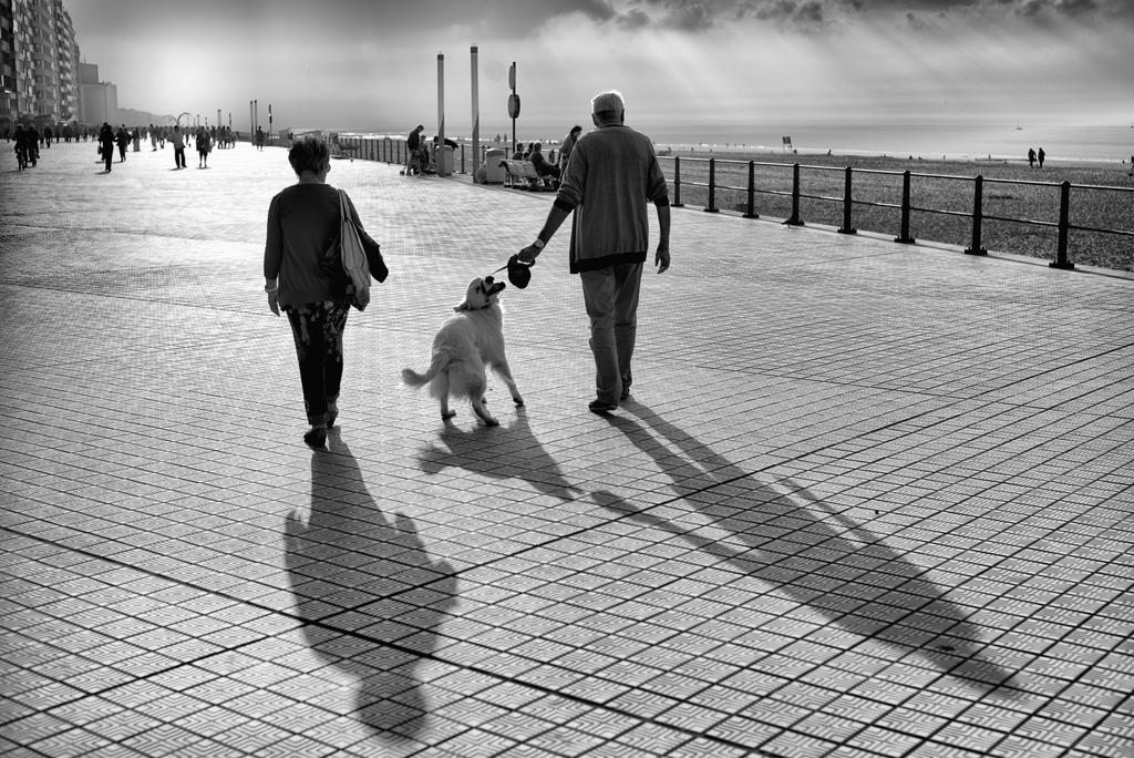 Couple with dog by Logos41