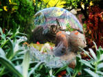 Bubble cat (autumn)