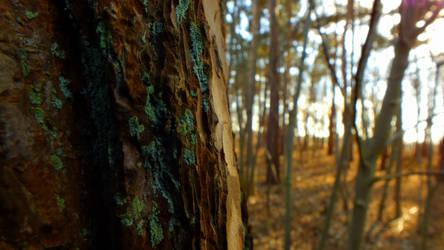 Peeking at the Wood