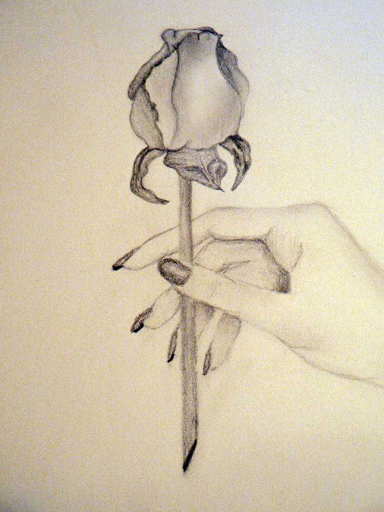 holding a rose by cheyenne21 on deviantart
