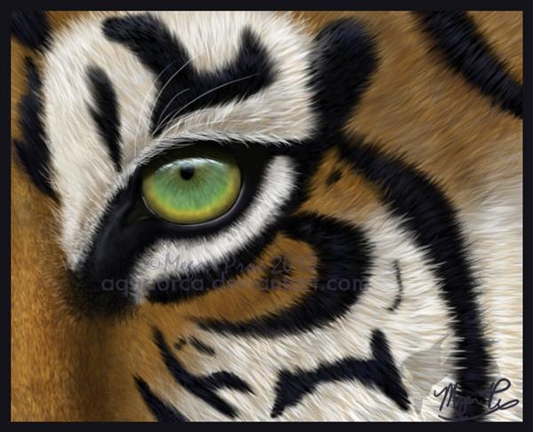 Tiger Eye by AquaOrca