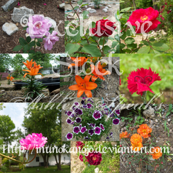 Exclusive Stock-Floral
