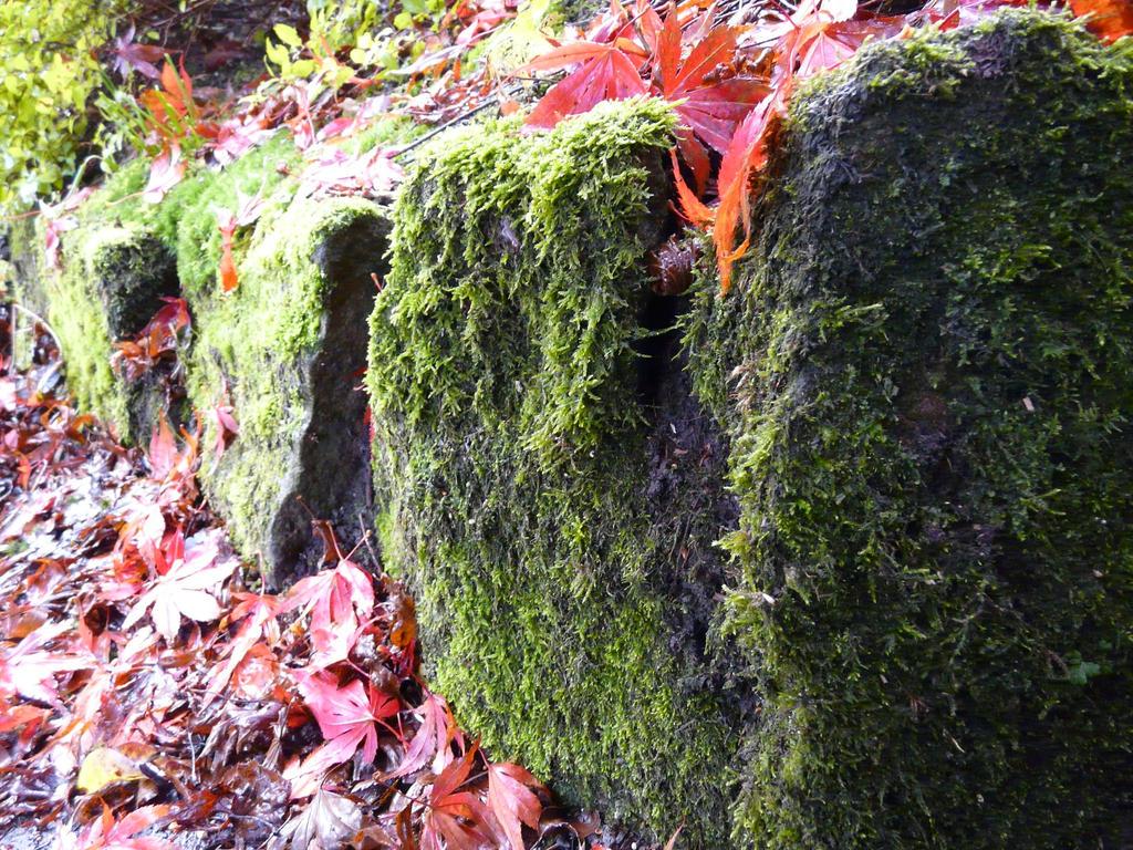 Garden 2 By Witch Haze On Deviantart