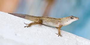 Florida Critter 2