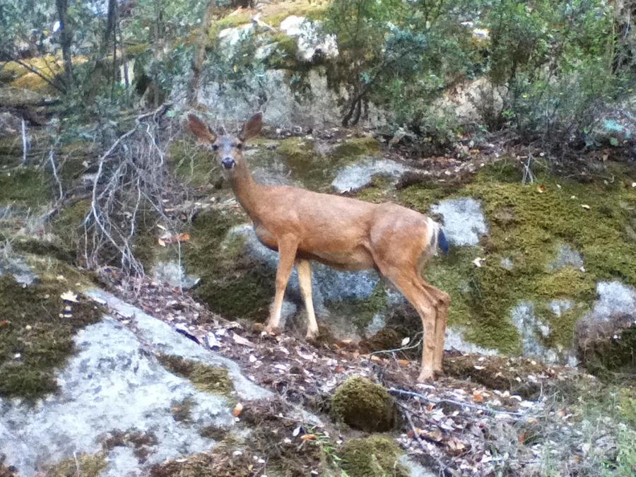 Deer by PseudonymousBosch