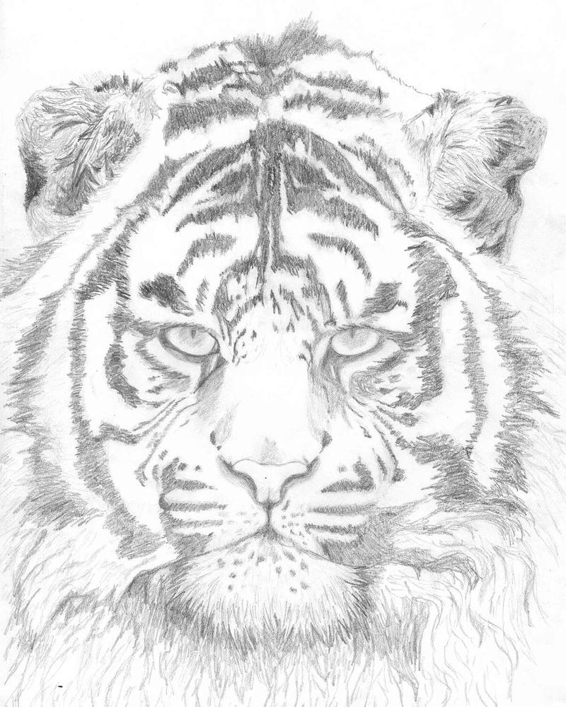 Tanna --- Tiger - pencil by Tannalein
