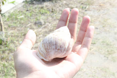 The shell is in my own hand