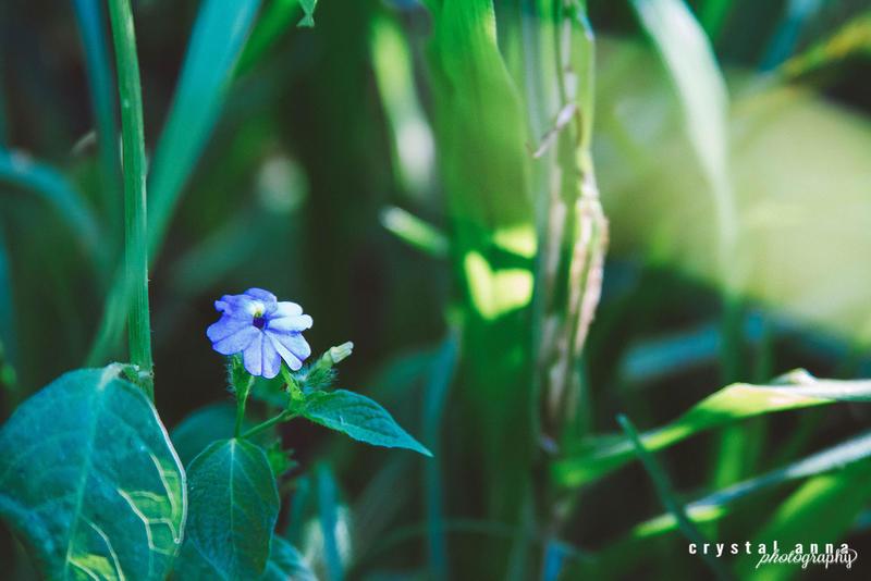 Little Purple by freestyle-1love