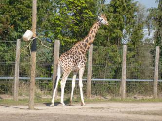 T.Z. Giraffe by Captain-Art-hero