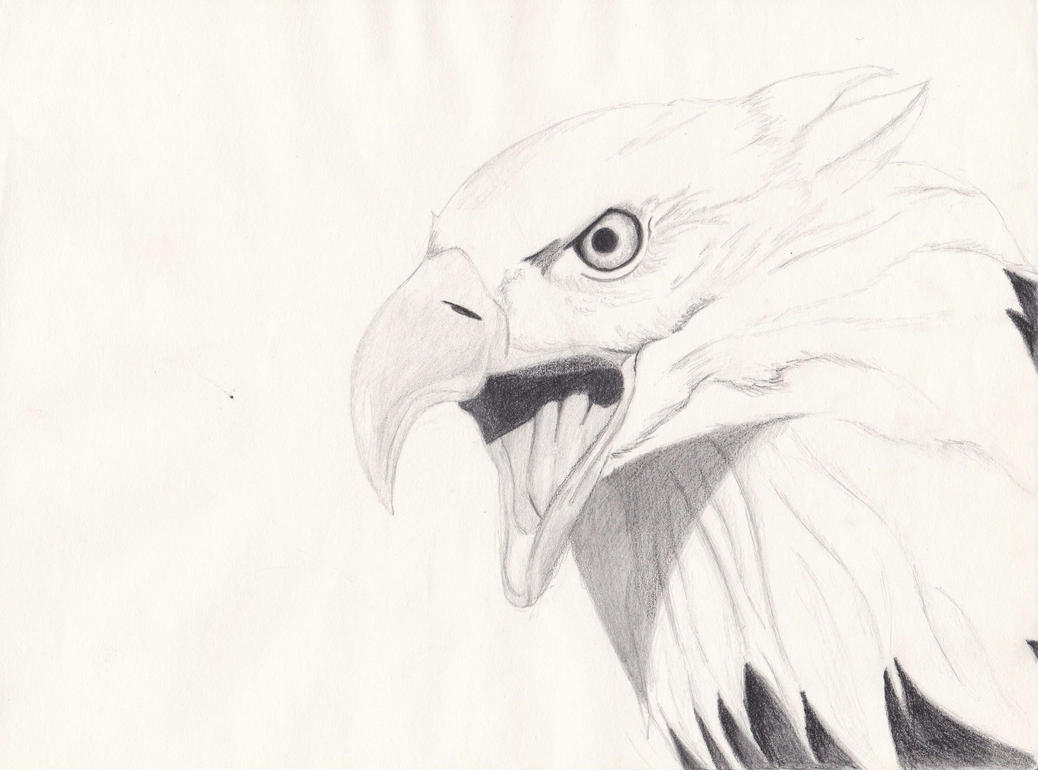 eagle by Leykats