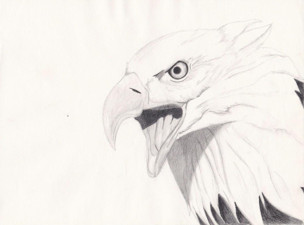 eagle by Leykats