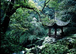 Forest at Emei Mountain