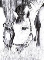 Horses by DragonTreasureArt