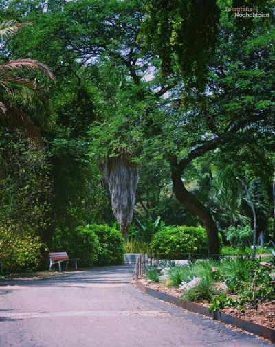 Jardin botanico 11 by noohohIcant
