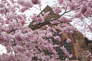 Cherry Blossom + Church
