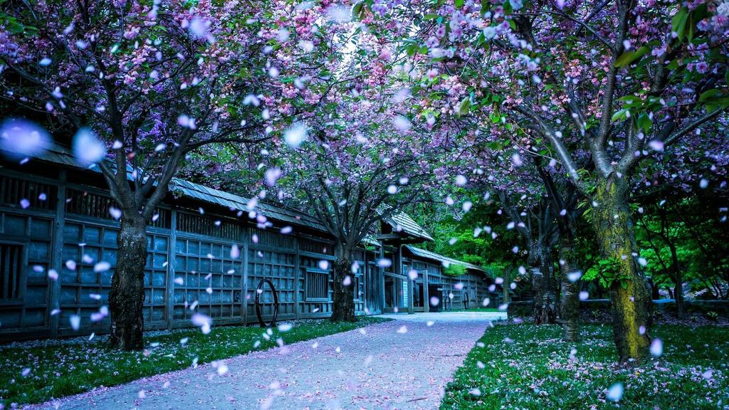 Beautiful Nature Spring
