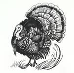 Day 6 - Wild turkey by Yullapa