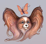 Papillon: dog and butterfly
