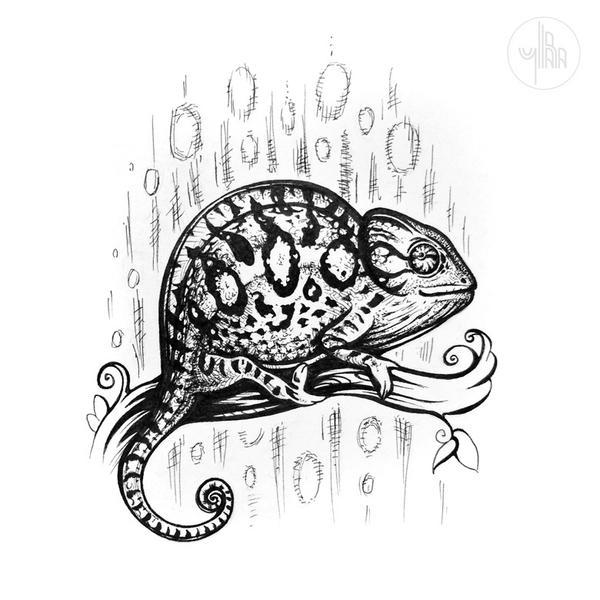 Carpet chameleon (Furcifer lateralis) by Yullapa