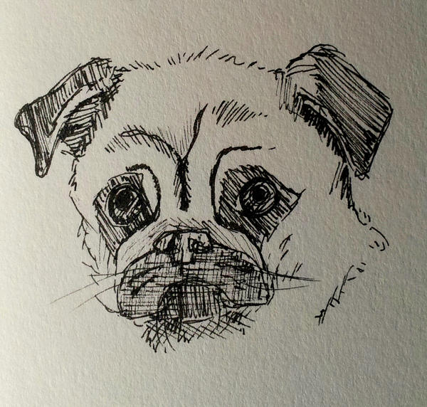 Pug by Ridingthelight