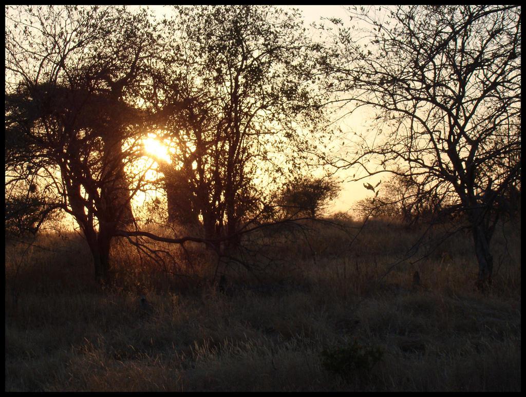 Morning Gold by xofox