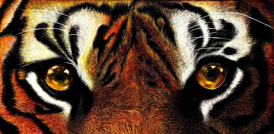 Blazing Eyes by shonechacko