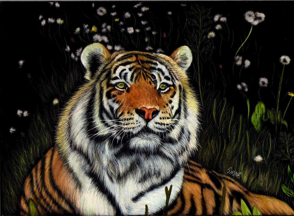 Siberian Tiger 2 by shonechacko