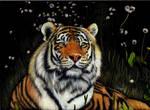 Siberian Tiger 2