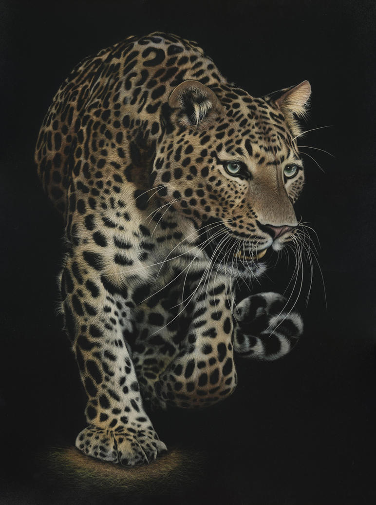 Scratchboard - On the Prowl by shonechacko