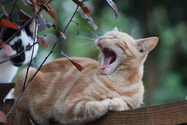 Stray kitten by shonechacko