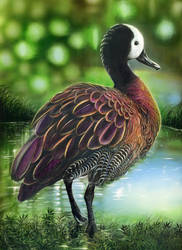 White-faced Whistling Duck - INKS by shonechacko