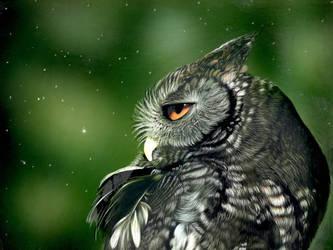 WIP - Screech owl - Inks on clayboard by shonechacko