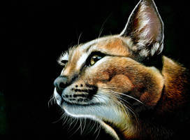 Caracal - Scratchboard colored with inks