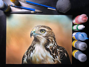 Inks on claybord - Red tailed Hawk
