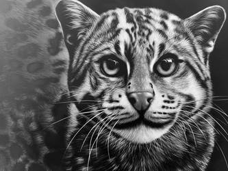 Fishing cat - Inks on scratchboard