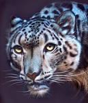 Snow Leopard - Inks on scratchboard
