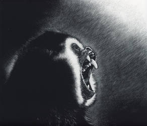 Anguish - scratchboard