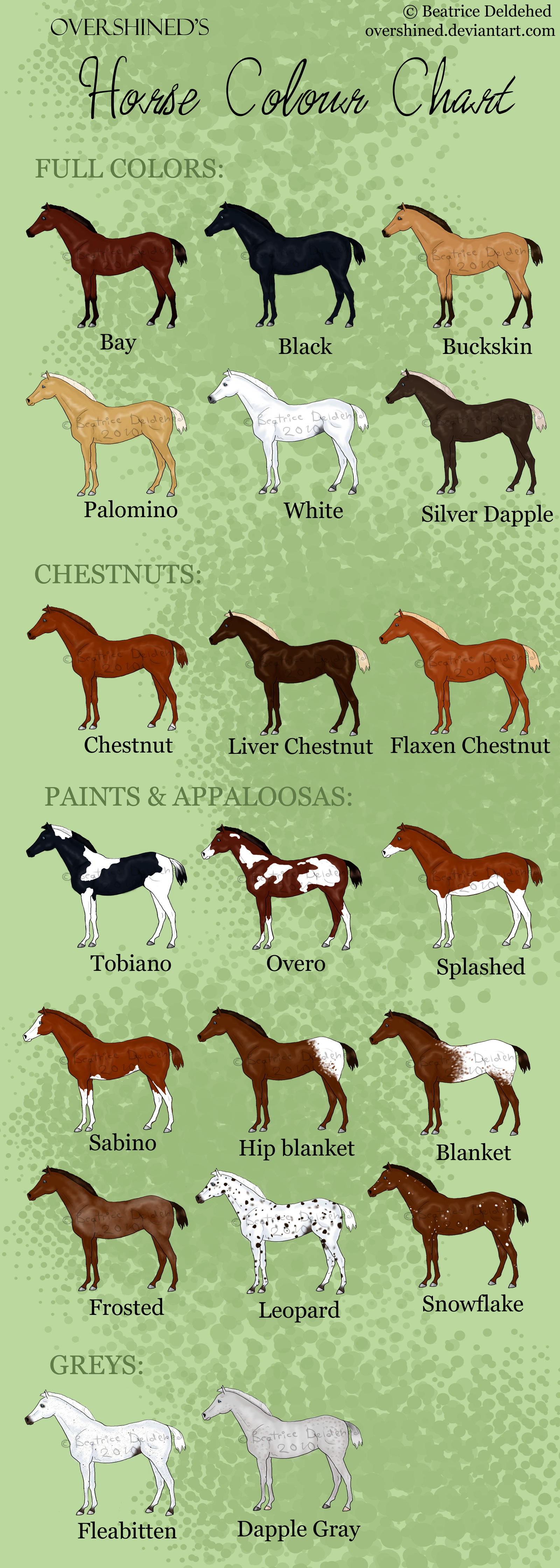 Horse Colour Chart by overshined