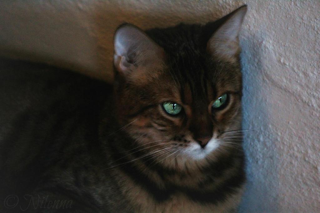 ~ Soft kitty warm kitty little ball of fur ~ by Nilenna