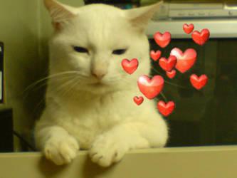 my cute cat by catcatmycat
