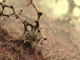 Symbiosis by batjorge