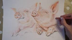 WIP Happy Pigs