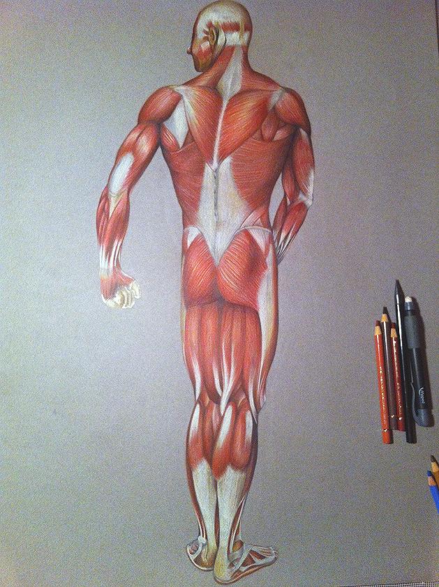 cuerpohumano | Explore cuerpohumano on DeviantArt