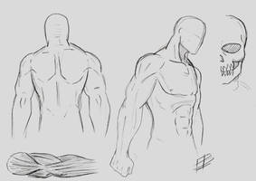 Male Anatomy Study 1