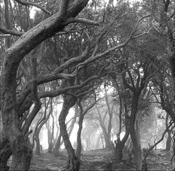 Sleepy Hollow by DonovanDennis