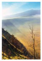 Golden Hill by DonovanDennis
