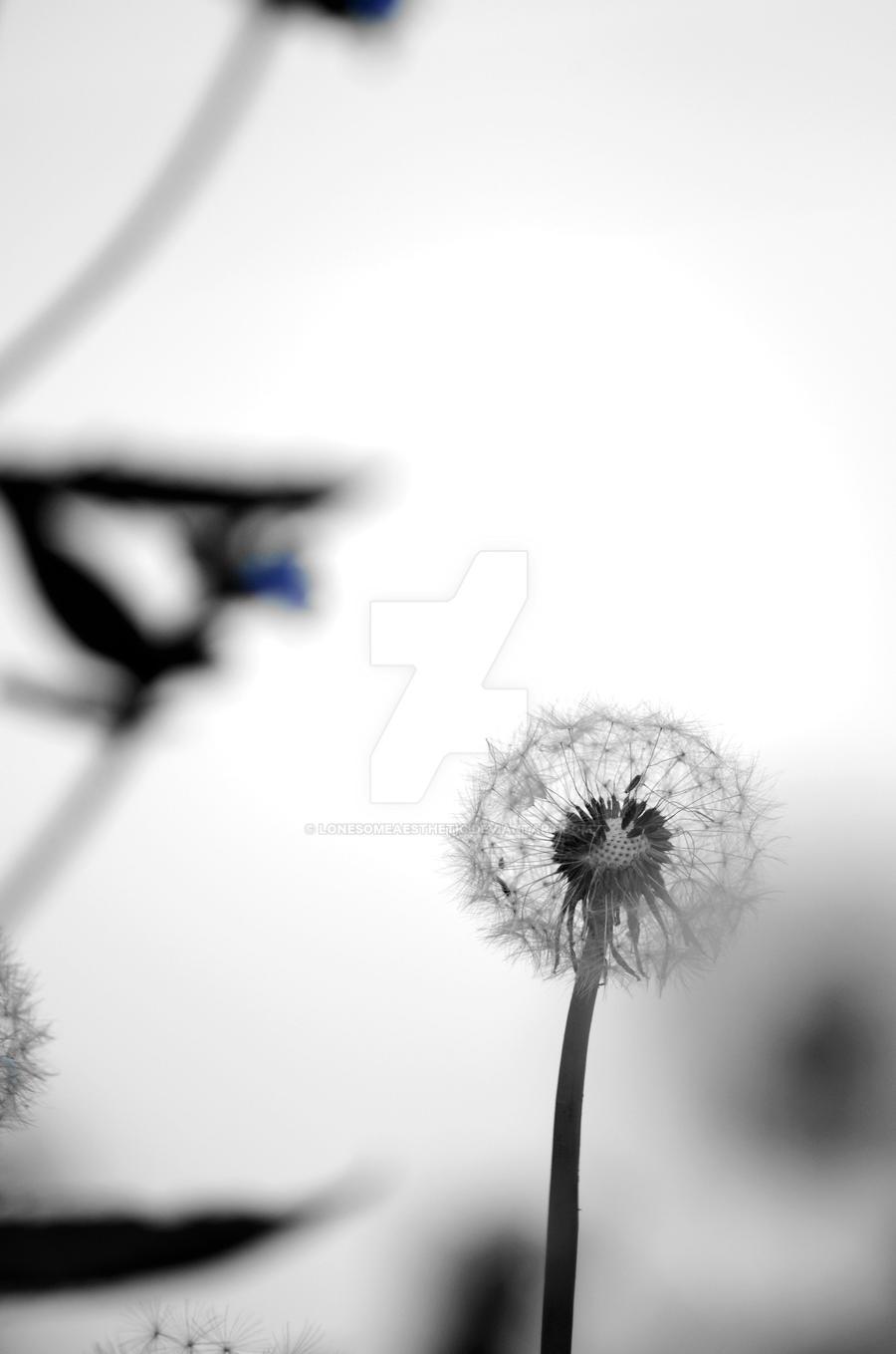 Dandelion II by lonesomeaesthetic