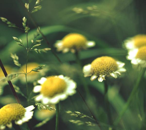 Summer Wind II by lonesomeaesthetic